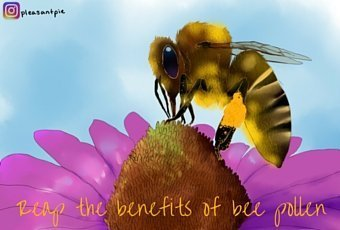 Reap the Benefits of this Superfood: Bee Pollen 1