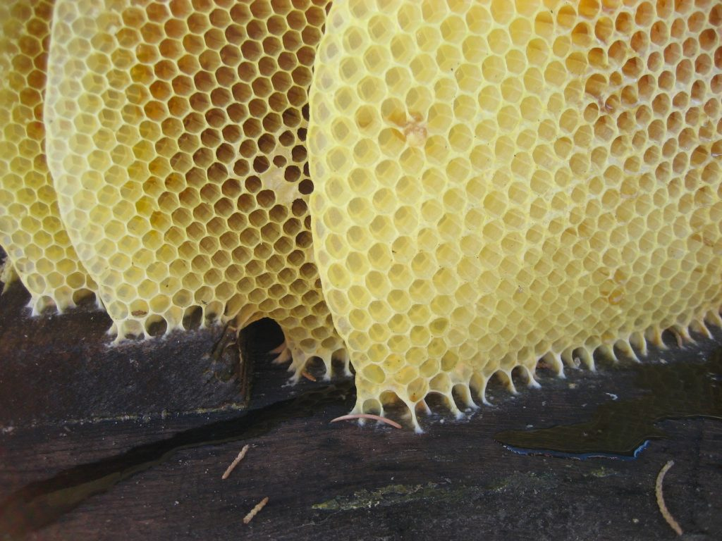 Beeswax is a renewable resource
