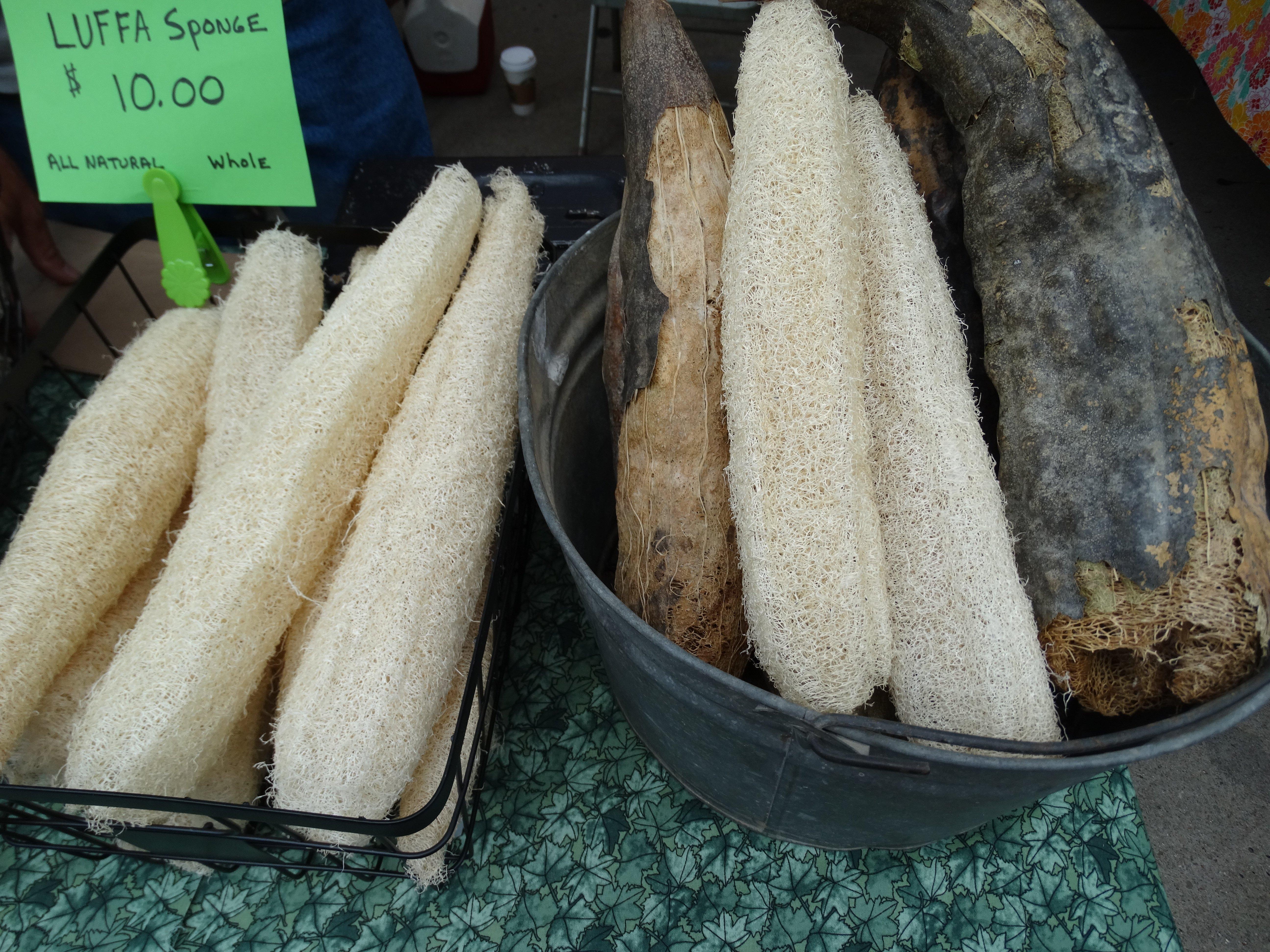 luffa sponge at farmers market