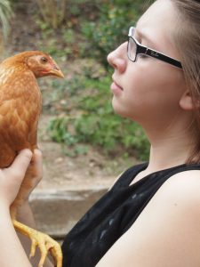 How to Keep Urban Backyard Chickens