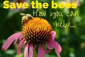 Save the Bees: Ways to Help