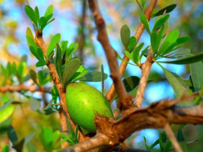 10 Wonderful Ways to use Organic Argan Oil in your Beauty Routine