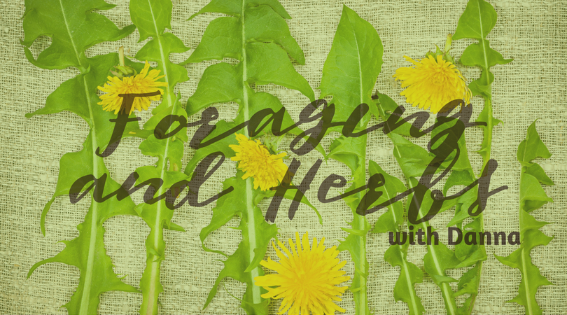 Foraging and Beginning Herbs with Danna from Wisteria Herbs