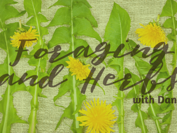 Foraging and Beginning Herbs with Danna from Wisteria Herbs – Episode 11 of A Healthy Bite