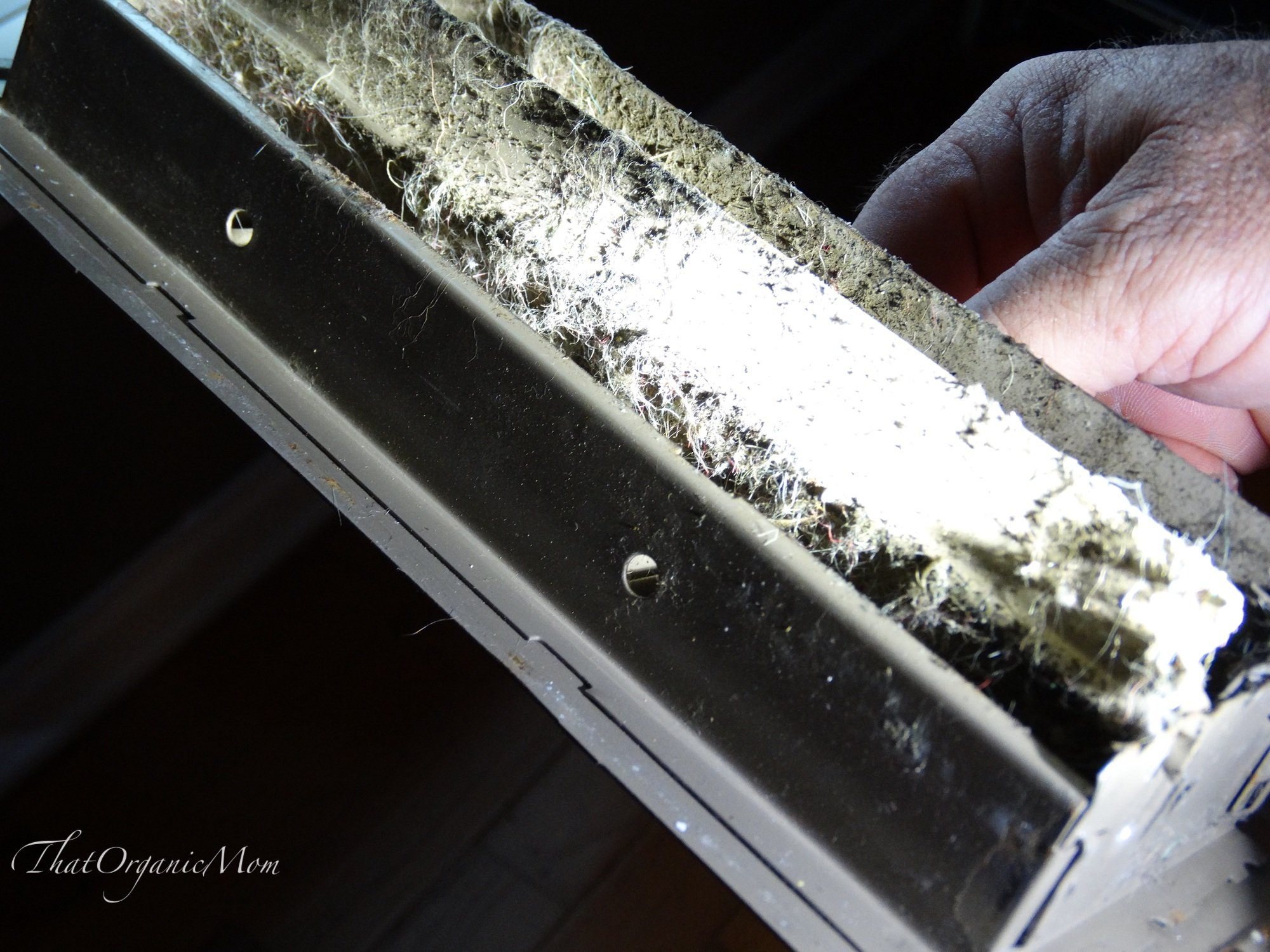 Mold Remediation Steps to remove mold from our home