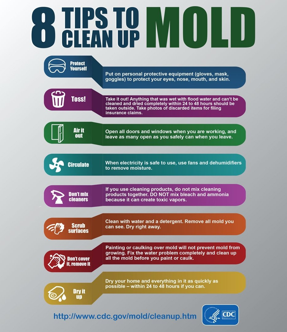 CDC 8 Tips to Clean Up Mold