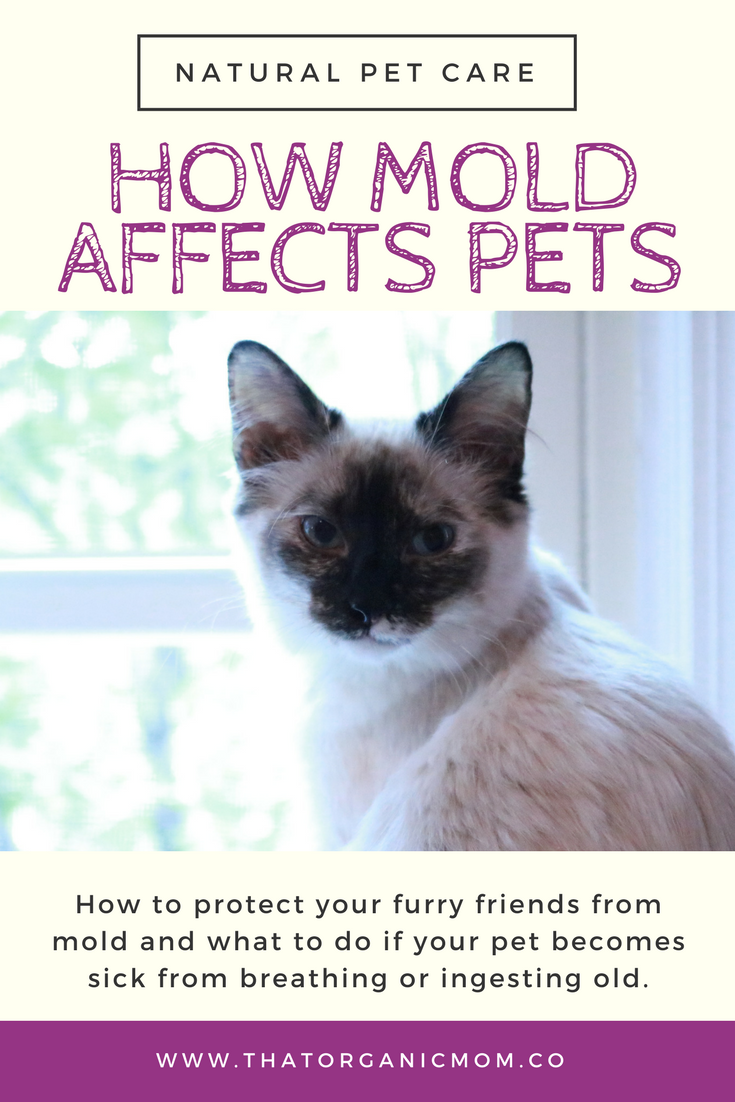 How mold can make pets sick plus how to protect them