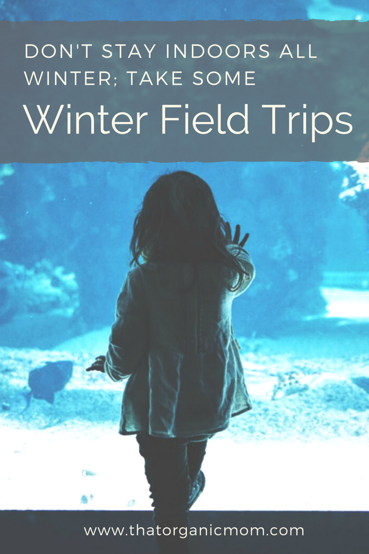 Winter Field Trips for Homeschoolers (and everyone else!)