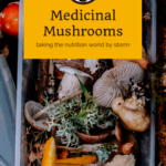 How Medicinal Mushrooms are taking the nutrition world by storm 11