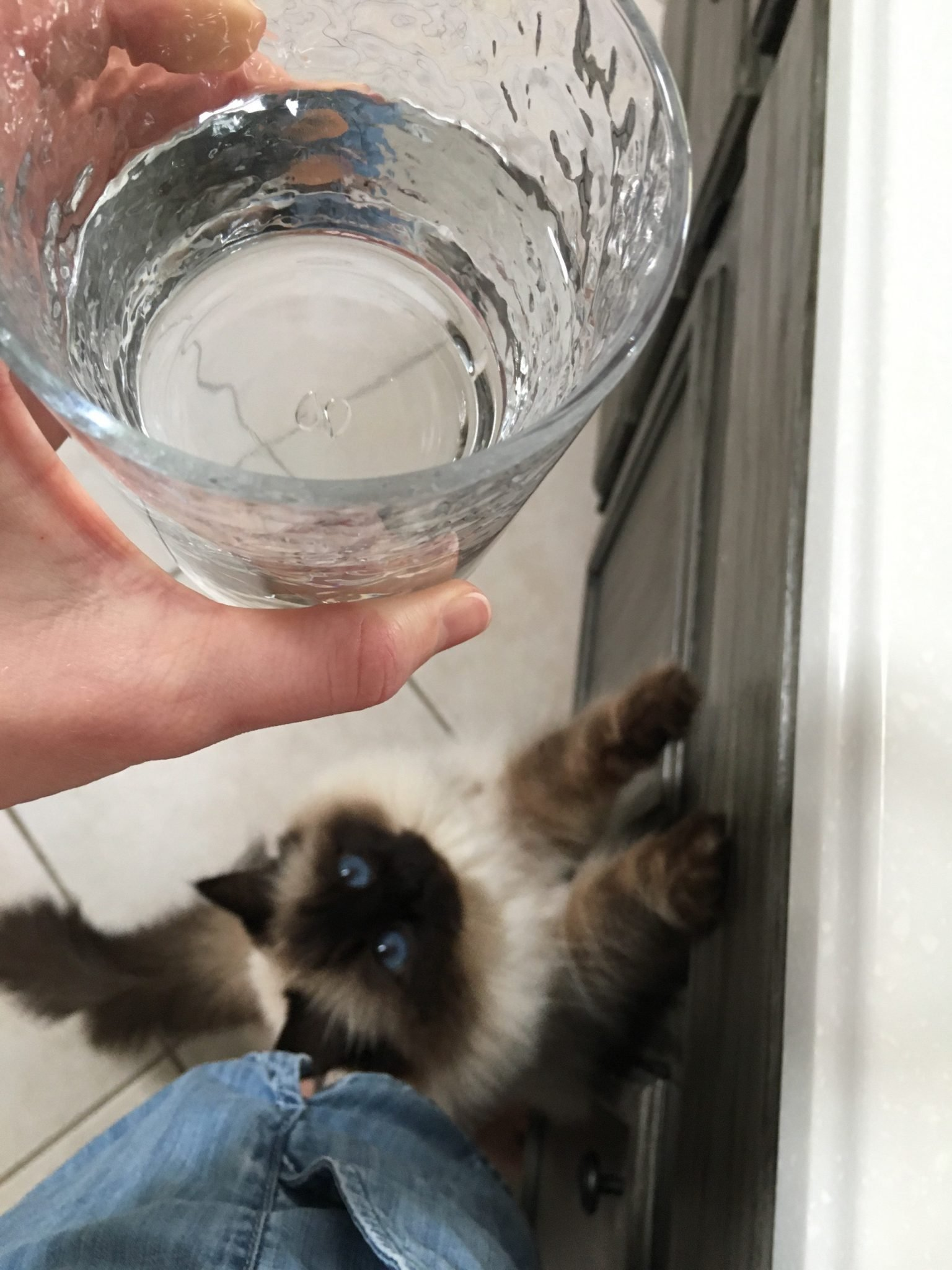 "pets can suffer urinary problems from drinking hard water. ""Urinary issues are a BIG problem in both felines and canines. Giving your pet a better life might be as simple as changing their water"