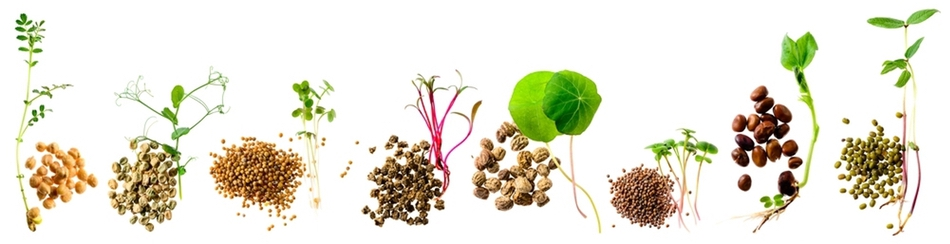 How to Grow Sprouts and Microgreens for a Healthy Diet