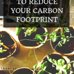 4 Simple Ways to Reduce Your Carbon Footprint 3