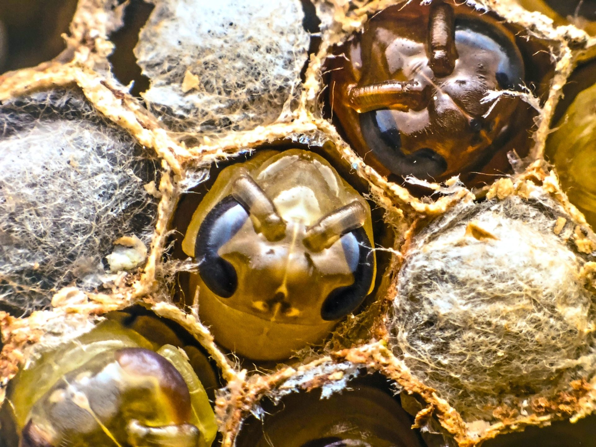 How to use Mānuka Honey with all the many benefits it offers 6