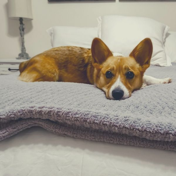 Why Do Weighted Blankets Work and Which One Is Best? 1